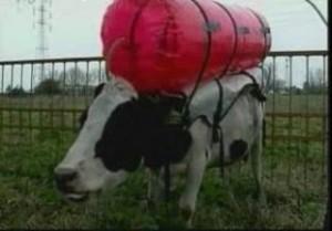inek-gaz-balonu